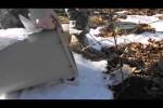 Typ entlässt gefangene Maus in die Freiheit – Falke krallt sie sich einen Moment später